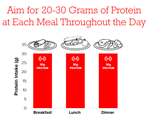 Protein Throughout the Day